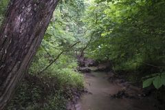 Small stream in a forest in heavy rain royalty free stock image