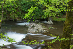 Small stream in forest. Stock Photo