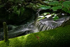 Small stream in the forest in quebec canada. Small stream flowing beside a down tree covered with moss in the forest in Quebec Canada Stock Images