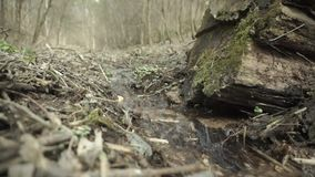 Small stream in the forest stock video footage