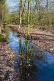 Small stream in a forest reflects the bare branches of the trees Royalty Free Stock Photos