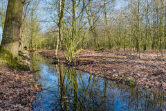 Small stream in a forest reflects the bare branches of the trees Royalty Free Stock Image