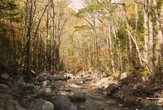 Small stream. Forest thicket with a small stream and stones Stock Photo