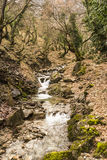 Small Stream in Forest at winter Royalty Free Stock Photography