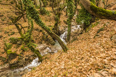 Small Stream in Forest at winter Royalty Free Stock Images
