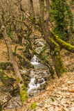Small Stream in Forest at winter Stock Image