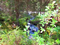 Small stream that further down the river meets. Forest, water, green stock photography