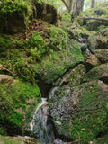 Small stream in greem forest in summer, moss growing on rocks royalty free stock photography