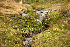 Small stream with green grasses Royalty Free Stock Photo