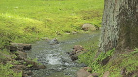 Small stream in a green park of Peterhof, Saint Petersburg stock footage