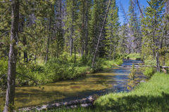 Small stream in Idaho mountains Stock Image