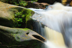 Small stream in jungle Royalty Free Stock Image