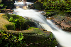 Small stream in jungle Royalty Free Stock Photography