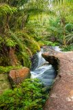 Small stream in jungle Stock Images