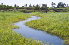 Small stream through marshland Stock Photography