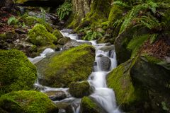 Beautiful Rain Forest Creek in the Pacific Northwest. Stock Photography