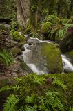 Beautiful Rain Forest Creek in the Pacific Northwest. Stock Image