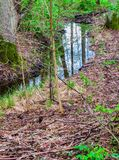 A small stream in the middle of the forest, with a reflection of the sky royalty free stock photography