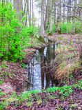 A small stream in the middle of the forest, with a reflection of the sky royalty free stock image