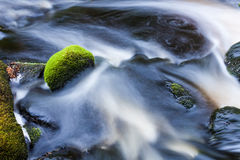 Small stream in mixed forest stock images
