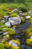 A small stream in northern Siberia. Water among moss and cobblestones. Stock Images