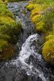 A small stream in northern Siberia. Water among rocks and moss. Royalty Free Stock Images