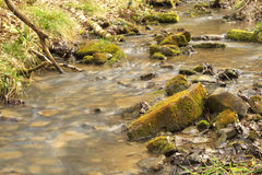 Small stream in old wood Royalty Free Stock Images