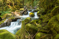 Small stream running between green moss covered rocks Stock Images