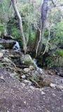 Small stream Royalty Free Stock Image
