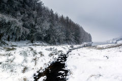 Small stream running through a snow capped landscape. A small stream flows past fur trees on a snow covered landscape towards a lake stock image