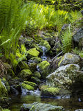 Small stream with running water Stock Photography