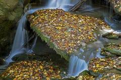 Small stream runs over mossy rocks. Royalty Free Stock Photo