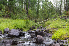 Small stream somewhere in the north. Royalty Free Stock Photo