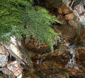 Beautiful creek flowing over the rocks. Small stream among stones and ferns with icicles Royalty Free Stock Photo