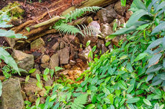 Small stream between stones and green grass and fern stock images