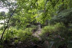 Small stream in a forest in heavy rain stock photo