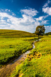 A small stream and tree in a farm field, in rural York County, P Stock Images
