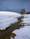 Small stream and tree in a snow covered farm field near Spring G Royalty Free Stock Image