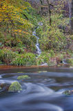 Small stream of water running into a larger river. Small waterfall running down a tree lined hillside into the larger river below royalty free stock images