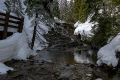 Small stream waterfall surrounded by coniferous trees during spring thaw Stock Image