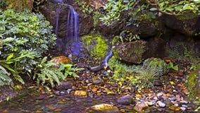 Small stream waterfall Royalty Free Stock Image