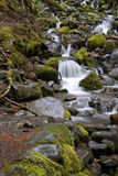 Small stream with waterfalls. Scenic view of small waterfalls in countryside stream Stock Photography