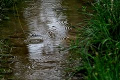 A small stream on which raindrops fall close up stock image