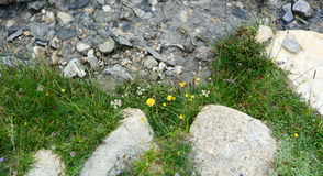 Small stream with wild flowers in Ladakh, India Royalty Free Stock Photography