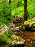 Small stream in the woods Royalty Free Stock Images
