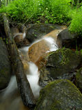 Small stream in the woods Royalty Free Stock Image