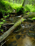 Small stream in the woods Stock Photo