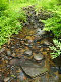 Small stream in the woods Royalty Free Stock Photos