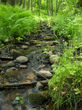 Small stream in the woods Royalty Free Stock Photography