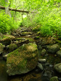 Small stream in the woods Royalty Free Stock Photo